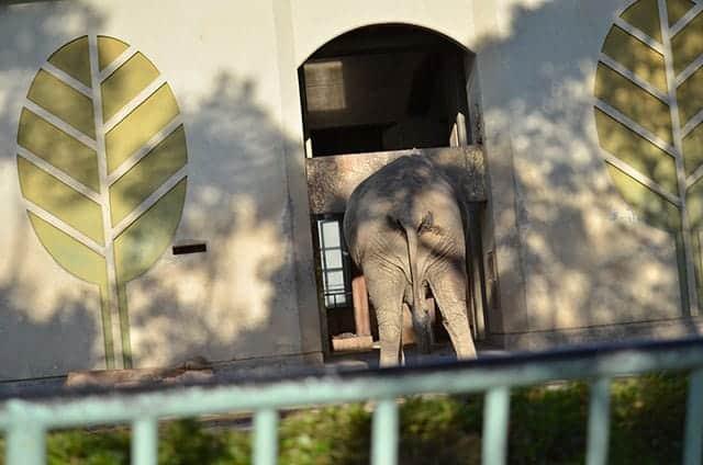 象のお尻の写真