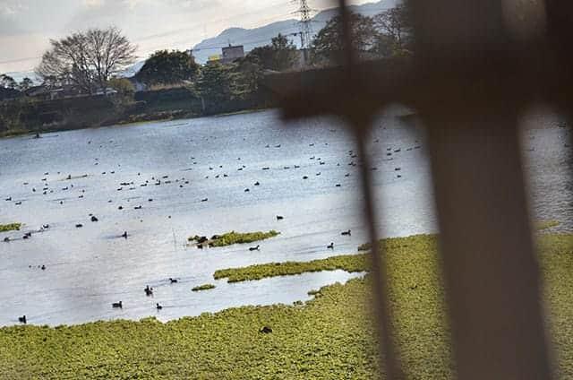 湖に浮かぶ鳥