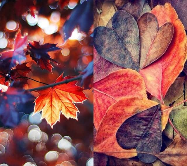 Pinterest Autumn Iphone WallpaperのオススメのiPhone用壁紙2枚