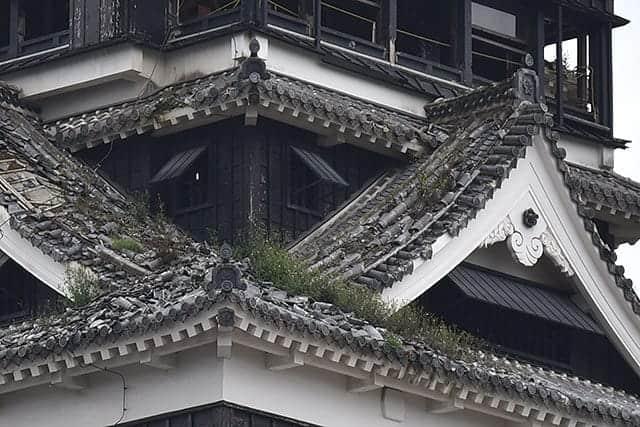 天守閣の屋根には雑草が