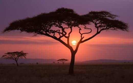 Mountain Lion スクリーンセーバーで使われる画像 サファリの夕焼け