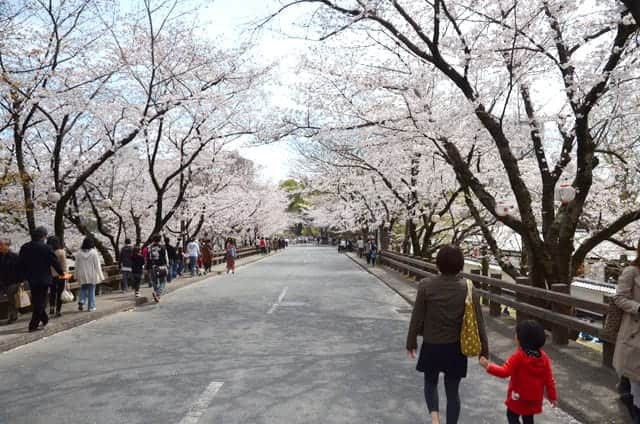 熊本城 加藤神社を抜けた坂の桜並木