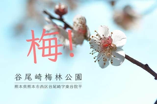 梅!「谷尾崎梅林公園」熊本県熊本市西区谷尾崎字東谷院平