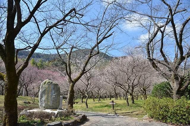 梅林公園入り口の記念日
