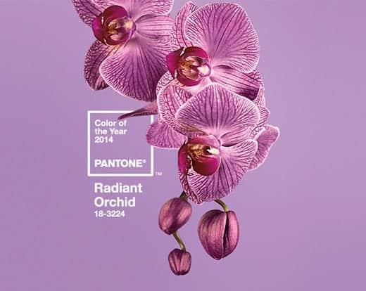 2014年の流行色は光り輝く淡い蘭の紫色 Radiant Orchid