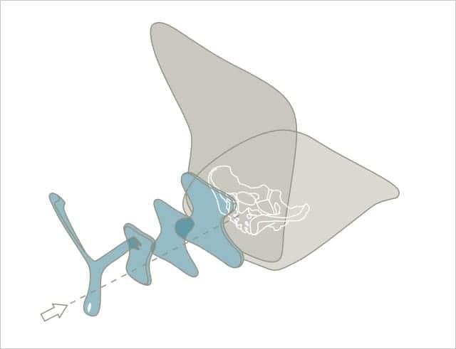 アーロンチェアの脊椎サポートイメージ