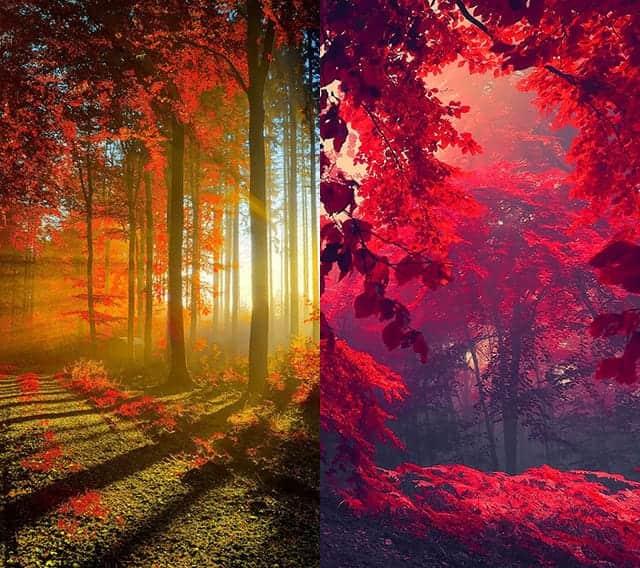 NAVERまとめ【iPhone壁紙】秋を感じる紅葉の壁紙【秋】のオススメのiPhone用壁紙2枚