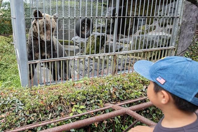 こんな近くでクマを見られる