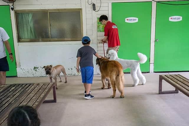 小型犬だけでなく大型犬もいっぱい