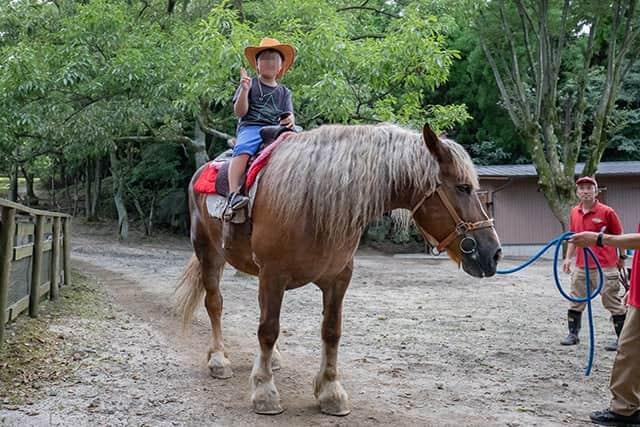 大きな馬に乗れます!