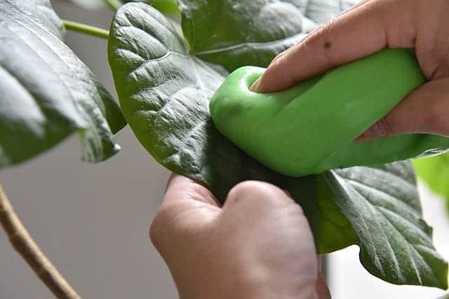 観葉植物やサボテンのホコリを吸着するスライム『サイバークリーン LeafCare』レビュー 害虫防止効果も