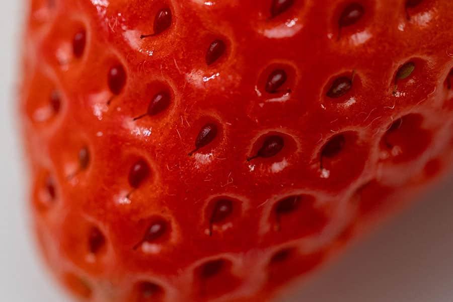 ふるさと納税の返礼品 さがほのか イチゴ