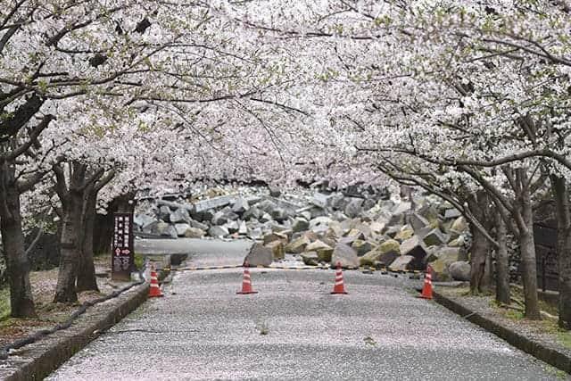 熊本地震から1年経過した熊本城はどうなっているか。