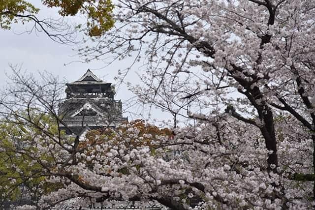 二の丸広場から見える熊本城の天守閣