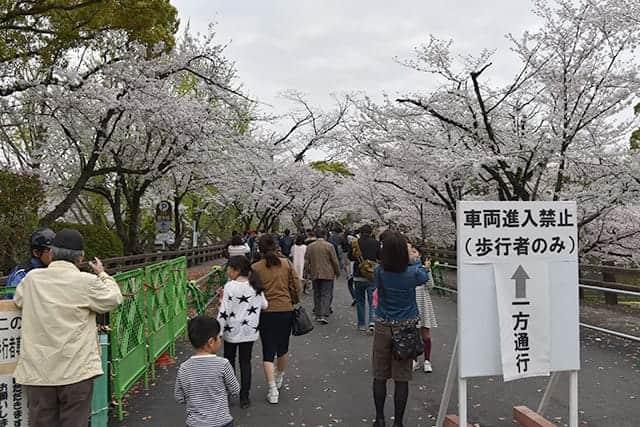 桜の開花に合わせて期間限定で解放された、城彩苑横の行幸坂