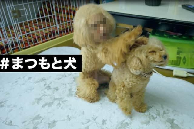 松本人志が仕掛ける第2弾が秋公開予定!