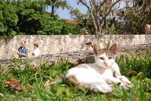 shuri-cat02.jpg