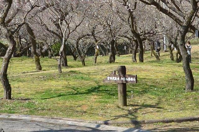 梅林公園内の案内看板 宮本武蔵ゆかりの座禅石