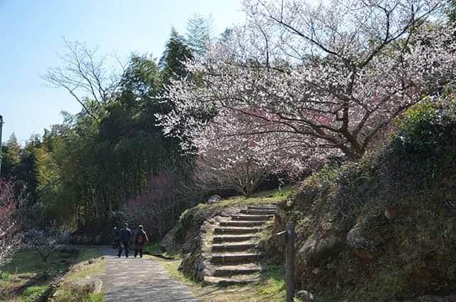 宮本武蔵の座禅石への階段
